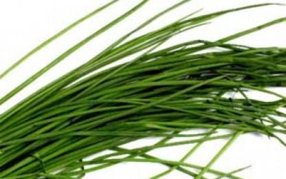 Arpagic verde (sibulet)