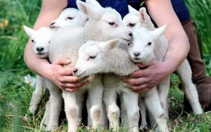 Vom ajunge să mâncăm animale clonate?