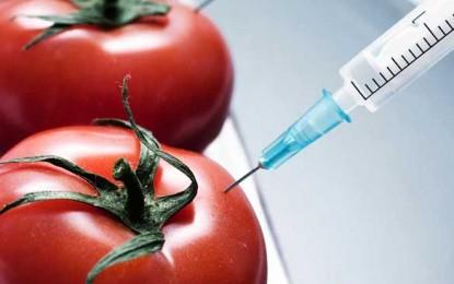 Încă o barieră în calea organismelor modificate genetic