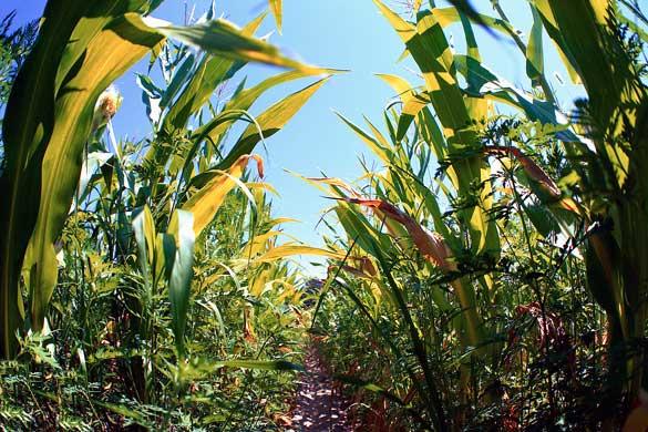 270.000 de agricultori americani au dat Monsanto în judecată