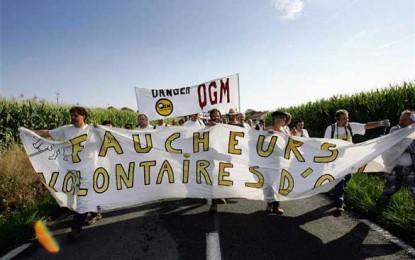 500 de sticle de Bordeaux pentru cosașii anti-OMG