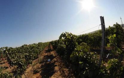 Răzvan Macici vrea să facă la Murfatlar cele mai bune vinuri din România