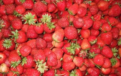 Mâncați căpșune și beți fără grijă!