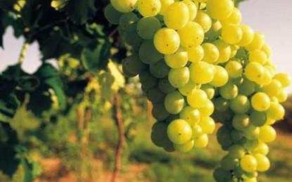 Comisia Europeană pare să dea puțin înapoi în ceea ce privește reforma vinului