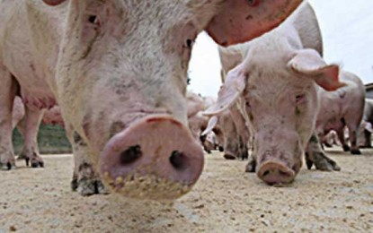 Condamnare la moarte în scandalul porcilor dopați cu clenbuterol