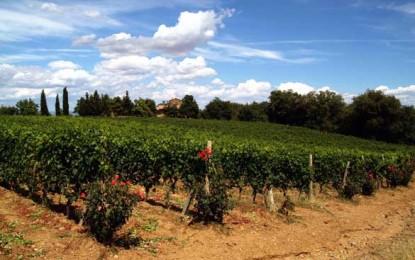 """Producătorii din Montalcino au decis: tradiția e mai importantă decât """"ce vrea piața"""""""