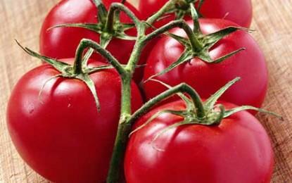 De ce n-au roșiile din supermarket niciun gust