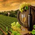 Vin consum productie