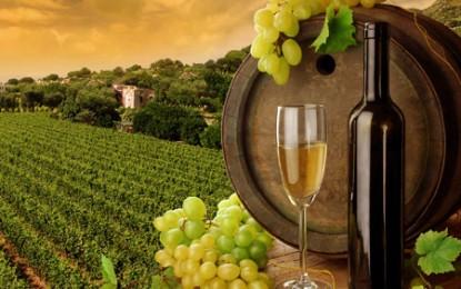 Producem mai puțin vin, dar bem mai mult