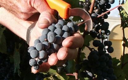 Guvernul vrea să introducă taxa vitivinicolă