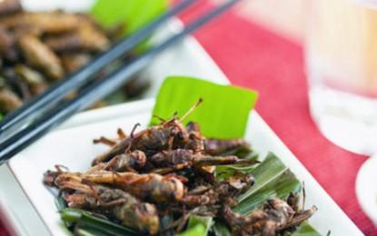 ONU a găsit soluția împotriva foametei: vom mânca insecte!